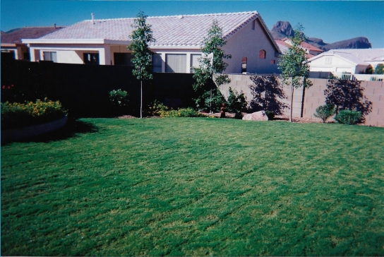 Newly laid sod in our backyard in 1998