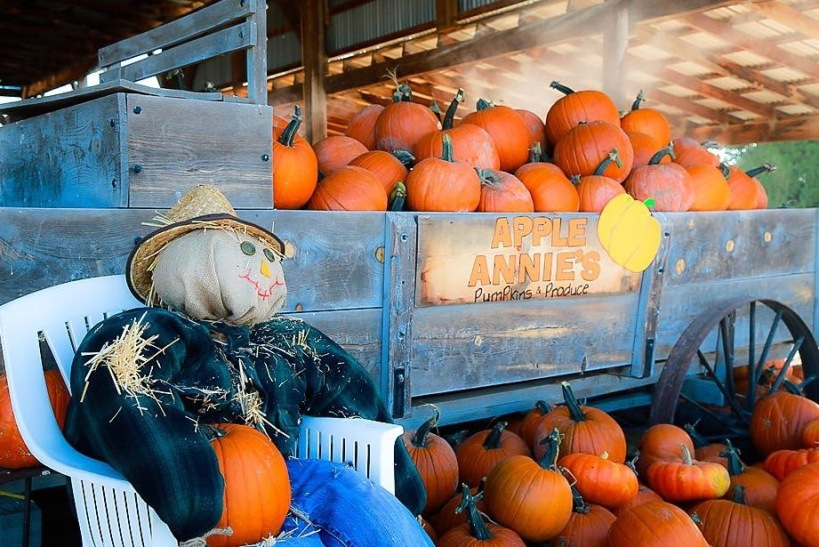 Pumpkins at Apple Annie's in Wilcox, Arizona
